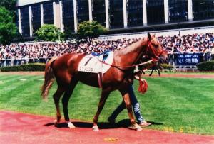 100308_1995/06/11/札幌競馬場タニノシスターデビュー戦