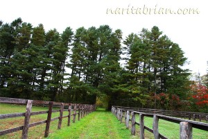 101009_池田町_ビワタケヒデの放牧地への道01