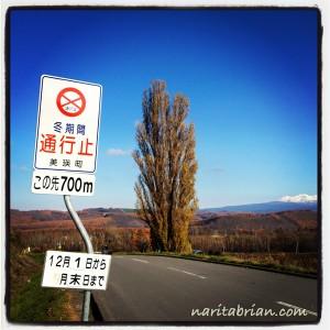 121111_美瑛ケンメリの木と看板。11月から冬です