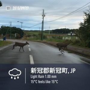 2015/09/27/新冠にて鹿5頭横断中