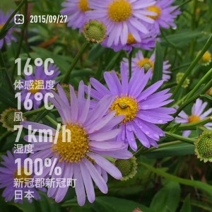 2015/09/27/新冠温泉レ・コードの湯で咲いていた花