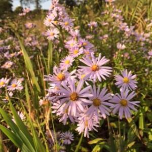 2015/09/27/ウトナイ湖にてわきに咲いていた花